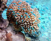 Cook Islands Underwater Gil